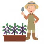 家庭菜園で無農薬野菜の栽培